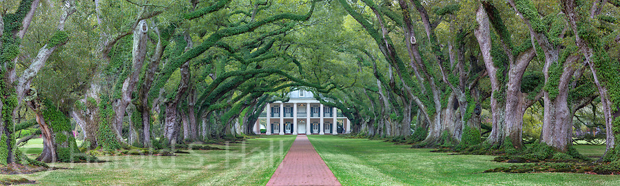 The evenly spaced ok trees were planted in the early 1700's.  The mansion was build in the early 1800's to entice a socialite bride to move to the plantation from New Orleans.