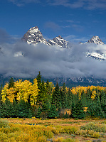 749450298v clouds from a clearing autumn storm partially hide the teton range with fall colored aspens and fir trees in the foreground from blacktail ponds in grand tetons national park wyoming