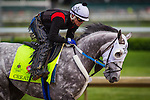 LOUISVILLE, KY - MAY 04: Creator gallops in preparation for the Kentucky Derby at Churchill Downs on May 04, 2016 in Louisville, Kentucky. (Photo by Zoe Metz/Eclipse Sportswire/Getty Images)