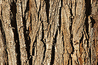 Bark of a pine tree, Andalusia, Spain.