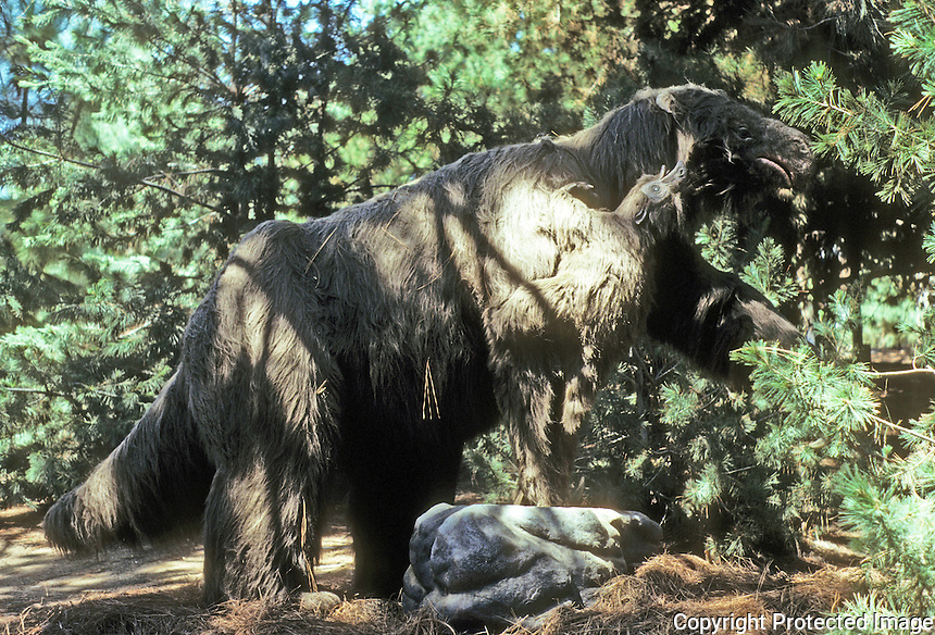 Pre-historic Animals: Giant ground sloth. Late Pliocene to late Pleistocene (6-1 million years ago). Ht., 15-18 ft.; 8 tons. Diet: leaves.