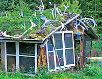 Shed with sod roof and caribou antlers. Gracious House Lodge, Alaska