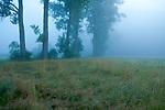 Europa, DEU, Deutschland, Hessen, Vogelsbergkreis, Schlitz, Hemmen, Schlitzer Land, Morgenstimmung im Fuldatal, Nebel, Baeume, Kategorien und Themen, Natur, Umwelt, Landschaft, Landschaftsfotos, Landschaftsfotografie, Landschaftsfoto, Wetter, Wetterelemente, Wetterlage, Wetterkunde, Witterung, Witterungsbedingungen, Wettererscheinungen, Meteorologie, Wettervorhersage<br /> <br /> [Fuer die Nutzung gelten die jeweils gueltigen Allgemeinen Liefer-und Geschaeftsbedingungen. Nutzung nur gegen Verwendungsmeldung und Nachweis. Download der AGB unter http://www.image-box.com oder werden auf Anfrage zugesendet. Freigabe ist vorher erforderlich. Jede Nutzung des Fotos ist honorarpflichtig gemaess derzeit gueltiger MFM Liste - Kontakt, Uwe Schmid-Fotografie, Duisburg, Tel. (+49).2065.677997, ..archiv@image-box.com, www.image-box.com]
