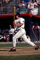Lowell Spinners infielder David Eckstein during a game at Stoklosa Alumni Field in Lowell, Massachusetts during the 1996 season.  (Ken Babbitt/Four Seam Images)
