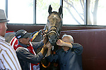September 19, 2015. Trainer Jerry Hollendorfer, right, helps get Tara's Tango ready to compete in the $1,000,000 Grade I Cotillion Stakes, one and 1/16th miles for three-year-old fillies, at  Parx Racing in Bensalem, PA. (Joan Fairman Kanes/ESW/CSM)