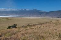 Tanzania. Ngorongoro.  Scenic View across the Caldera, Dry Salt Lake in the Distance.