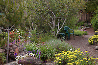 Gravel path with chairs by drought tolerant mixed border garden bed with trees, shrubs, perennials and grasses in Kyte California native plant garden