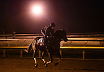October 31, 2020: Yaupon, trained by trainer Steven M. Asmussen, exercises in preparation for the Breeders' Cup Sprint at Keeneland Racetrack in Lexington, Kentucky on October 31, 2020. Alex Evers/Eclipse Sportswire/Breeders Cup