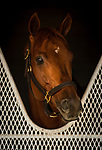 DEL MAR, CA - OCTOBER 29:  Gun Runner at the barn at Del Mar Thoroughbred Club on October 29, 2017 in Del Mar, California. (Photo by Alex Evers/Eclipse Sportswire/Breeders Cup)