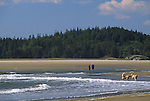 People and dogs on Popham Beach, Popham Beach State Park, Phippsburg, Maine, USA