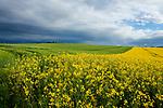 Europa, DEU, Deutschland, Rheinland-Pfalz, Pellenz, Fruehling, Agrarlandschaft, Feld, Raps, Rapsbluete, Himmel, Wolken, Wolkenstimmung , Natur, Umwelt, Landschaft, Jahreszeiten, Stimmungen, Landschaftsfotografie, Landschaften, Landschaftsphoto, Landschaftsphotographie, Wetter, Wetterelemente, Wetterlage, Wetterkunde, Witterung, Witterungsbedingungen, Wettererscheinungen, Meteorologie, Wettervorhersage, <br /> <br /> [Fuer die Nutzung gelten die jeweils gueltigen Allgemeinen Liefer-und Geschaeftsbedingungen. Nutzung nur gegen Verwendungsmeldung und Nachweis. Download der AGB unter http://www.image-box.com oder werden auf Anfrage zugesendet. Freigabe ist vorher erforderlich. Jede Nutzung des Fotos ist honorarpflichtig gemaess derzeit gueltiger MFM Liste - Kontakt, Uwe Schmid-Fotografie, Duisburg, Tel. (+49).2065.677997, ..archiv@image-box.com, www.image-box.com]