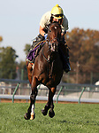 Holiday for Kitten, trained by Wesley Ward and to be ridden by Kendrick Carmouche , exercises in preparation for the 2011 Breeders' Cup at Churchill Downs on October 31, 2011.