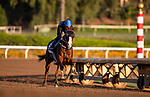 OCT 27: Breeders' Cup Dirt Mile entrant Blue Chipper, trained by Kim Young Kwan, gallops at Santa Anita Park in Arcadia, California on Oct 27, 2019. Evers/Eclipse Sportswire/Breeders' Cup