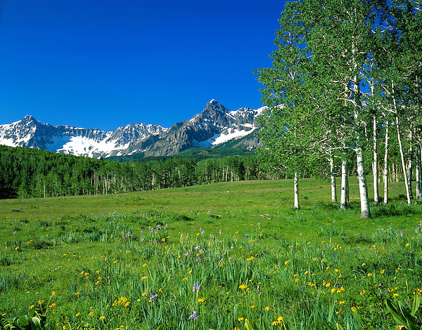 Sneffels Range and aspen trees, Telluride, Colorado, USA John guides custom photo tours in the Sneffels Range and throughout Colorado.