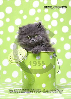 Xavier, ANIMALS, cats, photos(SPCHcats429,#A#) Katzen, gatos