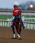 November 4, 2020: Starship Jubilee, trained by trainer Kevin Attard, exercises in preparation for the Breeders' Cup Mile at Keeneland Racetrack in Lexington, Kentucky on November 4, 2020. Scott Serio/Eclipse Sportswire/Breeders Cup