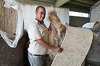 La coltura della canapa in Italia. Carmagnola(TO), sede dell'Assocanapa.Uso industriale della canapa. Pannelli per edilizia
