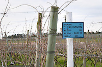 Vineyard before winter pruning with a sign saying Cabernet Sauvignon Vinedos y Bodega Filgueira Winery, Cuchilla Verde, Canelones, Montevideo, Uruguay, South America