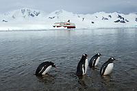 Penguins in Antarctica.