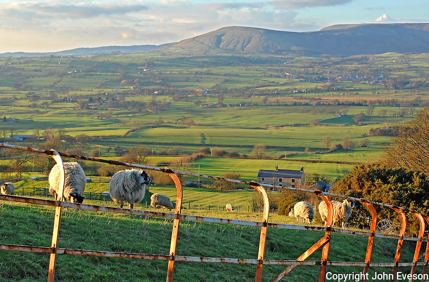 View with sheep looking towards Parlick Fell from Jeffrey Hill, Longridge Fell looking over the Loud Valley with Cheshire railings.