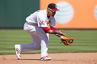 Luis Mateo (7) of the Springfield Cardinals fields a ground ball during a game against the Tulsa Drillers at Hammons Field on May 4, 2014 in Springfield, Missouri. (David Welker/Four Seam Images)