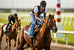 HALLANDALE BEACH, FL - JANUARY 26: Giant Expectations gallops for the Pegasus World Cup Invitational at Gulfstream Park Race Track on January 26, 2018 in Hallandale Beach, Florida. (Photo by Alex Evers/Eclipse Sportswire/Getty Images)