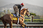October 27, 2014: V.E. Day exercises in preparation for the Breeders' Cup Classic at Santa Anita Park in Arcadia, California on October 27, 2014. Zoe Metz/ESW/CSM