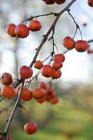 Orchard Dene Nursery - December