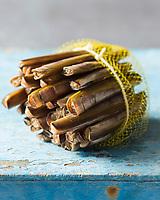 France, Normandie, Basse-Normandie, Calvados:  Couteaux   - Stylisme : Valérie LHOMME  //  France, Normandy, Calvados, Atlantic Razor clam, Solen, Mollusc shell, Styling Valerie Lhomme