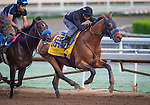 ARCADIA, CA - OCTOBER 29: Hoppertunity works in preparation for the Breeders' Cup Classic at Santa Anita Park on October 29, 2016 in Arcadia, California. (Photo by Zoe Metz/Eclipse Sportswire/Getty Images)