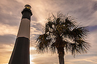 Tybee and Tree