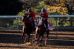November 4, 2020: Jasper Prince (left), trained by trainer Hideyuki Mori, exercises in preparation for the Breeders' Cup Sprint and Pingxiang (right), trained by trainer Hideyuki Mori, exercises in preparation for the Breeders' Cup Dirt Mile at Keeneland Racetrack in Lexington, Kentucky on November 4, 2020. Jon Durr/Eclipse Sportswire/Breeders Cup