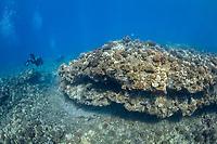 scuba divers and lava rock boulder, Lanai, Hawaii, USA, Pacific Ocean