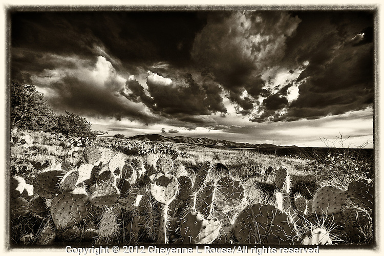 Aqua Fria Prickly Pear - Arizona - Agua Fria National Monument. Vintage Black & White