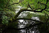 GERMANY, Aumuehle, forest / Deutschland, Aumühle, Sachsenwald