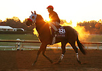 Wildman Jack, trained by trainer Doug F. O'Neill, exercises in preparation for the Breeders' Cup Turf Sprint at Keeneland Racetrack in Lexington, Kentucky on October 31, 2020.