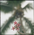 A flower and a palmtree.