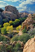 Fremont cottonwoods<br /> Granite Dells near Prescott<br /> Arizona