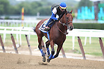 June 5, 2015: American Pharoah gallops the day before the Belmont Stakes at Belmont Park, Elmont, NY. Joan Fairman Kanes/ESW/CSM