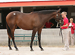 11 September 2010.  Hip #130 Street Sense - Cat's Fair filly, consigned by Eaton Sales.