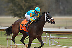 HOT SPRINGS, AR - JANUARY 15: Sassy Sienna #7, with jockey Gary Stevens aboard before the crossing the finish line in the 7th race at Oaklawn Park on January 15, 2018 in Hot Springs, Arkansas. (Photo by Justin Manning/Eclipse Sportswire/Getty Images)