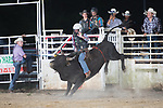 SEBRA - Gates, NC - 8.25.2018 - Bulls & Action