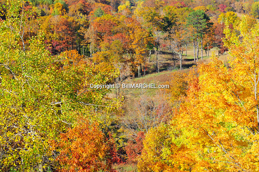 00440-010.15 Fall Color: Mix of mostly oak, aspen and birch are in peak of color.  Meadow in background. Mix of wildlife habitat. Brilliant, colorful.