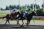 Jockey Emma-Jayne Wilson wrode D'wildcat Gold to a win and her 1000th career win at Woodbine Race Course in Ontario, Canada on September 16, 2012.