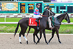 January 16, 2016: Jet Black Magic with Colby J. Hernandez up in the Silverbulletday Stakes race in New Orleans Louisiana. Steve Dalmado/ESW/CSM