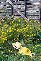 Romance implied: Two hats, his and hers, lying in the grass and wildflowers near an old corn crib, MO USA