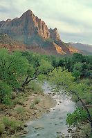 Fremont cottonwoods line the Virgin River<br />