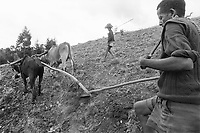 Ethiopia. West Gujam. Danbecha district. Anjeni is a small village. Two farmers, a father and his son, work in the field. The man drives the plough with two oxes while the boy guides the animals with a wood stick.  © 1996 Didier Ruef