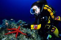 scuba diver and sea star, Echinaster sepositus, El Hierro, Canary Islands, Spain, Atlantic Ocean, Spanish Territory of Northern Africa