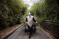 A researcher wearing a panda costume pushes a cart of panda dung and half eaten bamboo branches, cleaned out from the wild panda enclosure, to the rubbish tip at the Hetaoping Panda Conservation Centre. The researchers wear the panda costumes to prevent the wild pandas from becoming accustomed to humans.